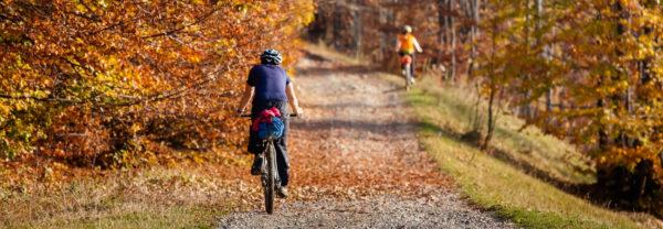 bikers on a woodland trail