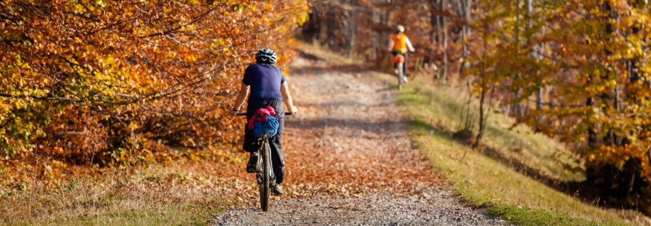 bikers on a woodland trail